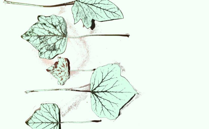 ALBUM REVIEW: Jake Bellissimo – Piece OfIvy