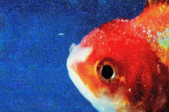 big_fish_theory_kttp.jpg